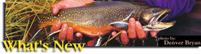 fly fish's report